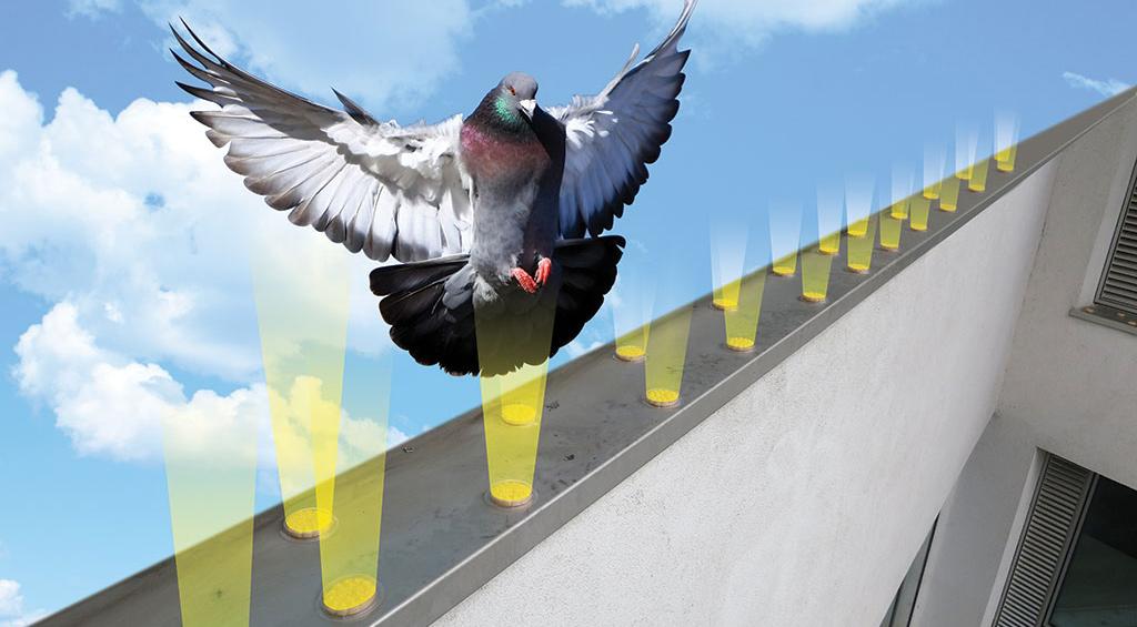 optický gél proti holubom
